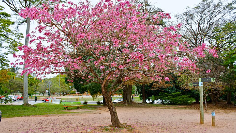 Árvore no Parcão